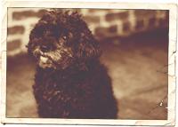 Ruby the Wonder Dog